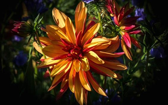 Papéis de Parede Close-up de flores, pétalas de laranja, luz solar