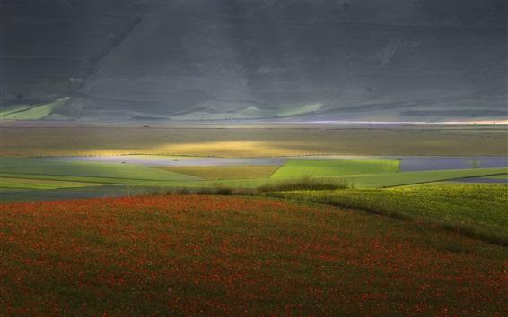 Fond d'écran Champ de fleurs, paysage de la nature