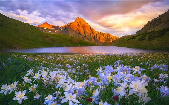 Wallpaper Flowers, lake, mountains, clouds, sun
