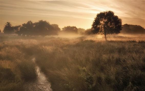 Обои Туман, трава, деревья, утро