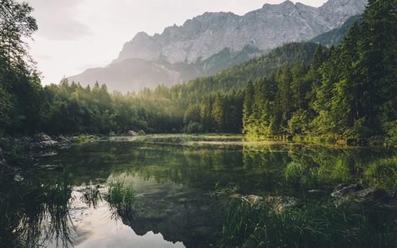 Fond d'écran Forêt, montagne, lac, brouillard, rayons du soleil