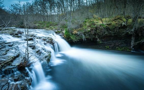 Wallpaper Forest, stream, water, dusk
