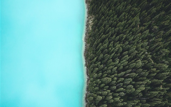 Wallpaper Forest, trees, lake, top view