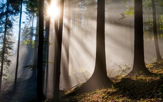 壁紙 森林、木々、太陽の光、眩しさ