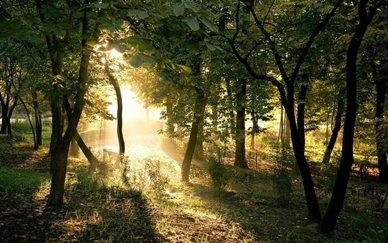 Papéis de Parede Floresta, árvores, luz solar, grama