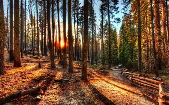 숲, 나무, 울타리, 햇빛 배경 화면  자연과 풍경 배경 화면  배경 ...