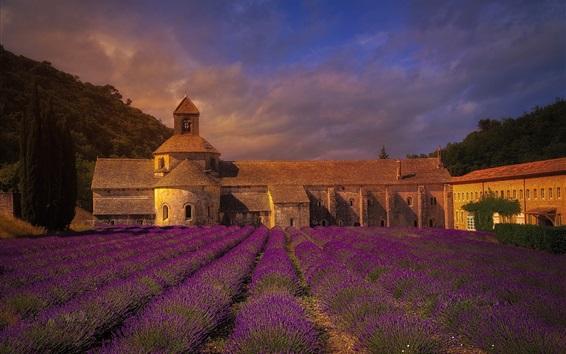Papéis de Parede França, mosteiro, campo de flores de lavanda