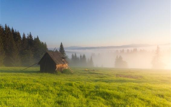 Fondos de pantalla Hierba, niebla, árboles, cabaña, mañana