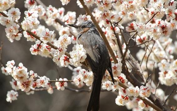 Обои Серая птица, дерево цветов