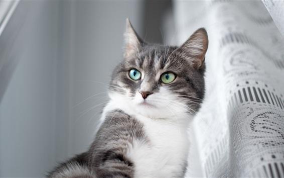 Обои Серый кот, зеленые глаза, комната