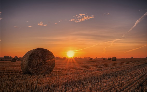 Обои Сено, поле, закат