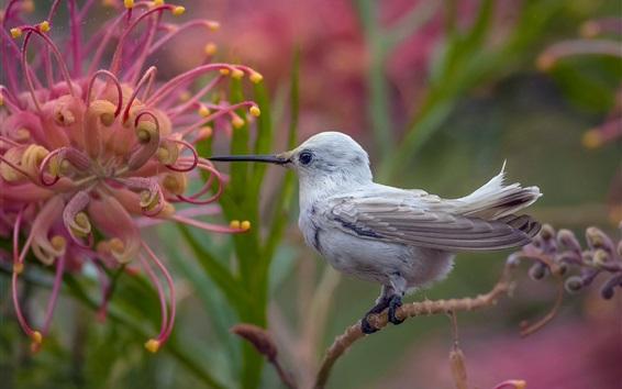 Wallpaper Hummingbird, white feathers, flowers