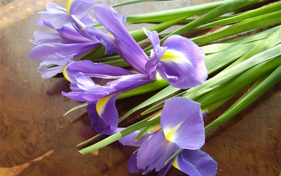 Wallpaper Iris flowers, bouquet