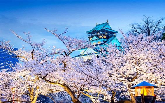 Wallpaper Japan, Osaka, temple, flowering, sakura, night