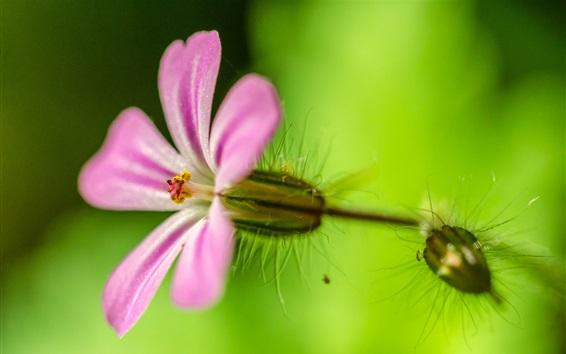 Обои Маленькая розовая цветочная макросъемка, зеленый фон