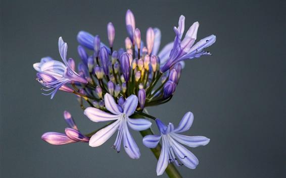 Wallpaper Little purple flowers, blurry background