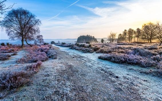 Обои Утро, трава, деревья, дорога, мороз, холод