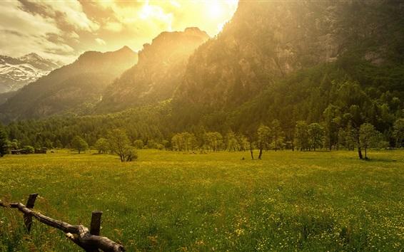 Papéis de Parede Montanhas, árvores, grama, manhã, cerca, luz do sol