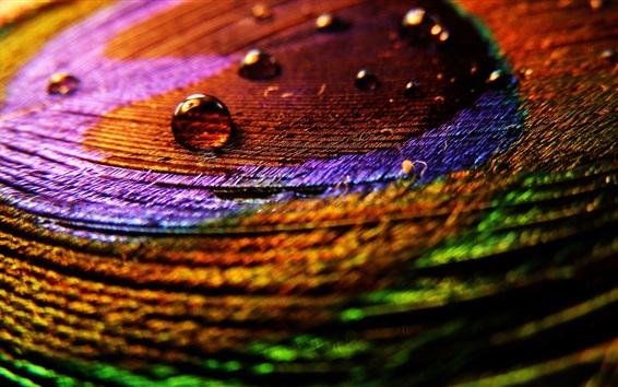 壁紙 多色の羽のクローズアップ、水滴