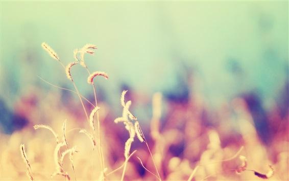 Papéis de Parede Natureza, grama, fundo desfocado