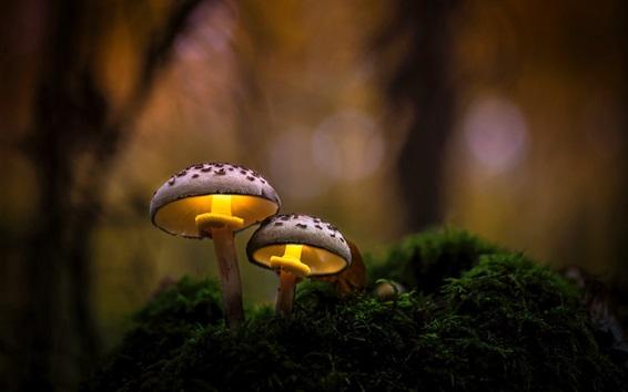 Papéis de Parede Natureza, cogumelos, grama, floresta