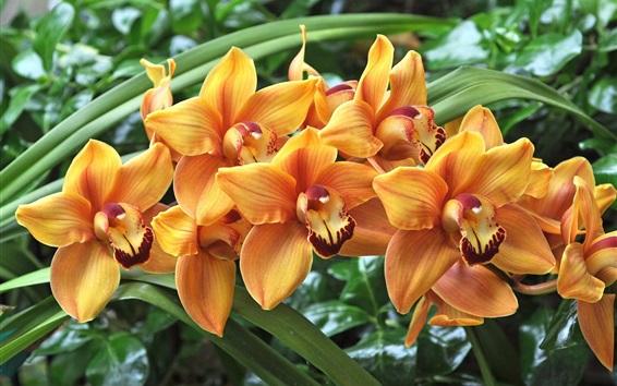 Wallpaper Orange orchids, green leaves