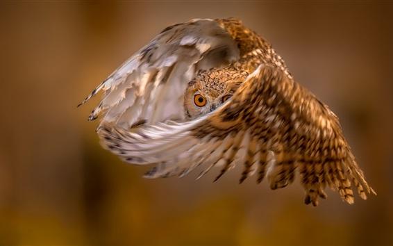 Fondos de pantalla Vuelo de búho, alas, ojo