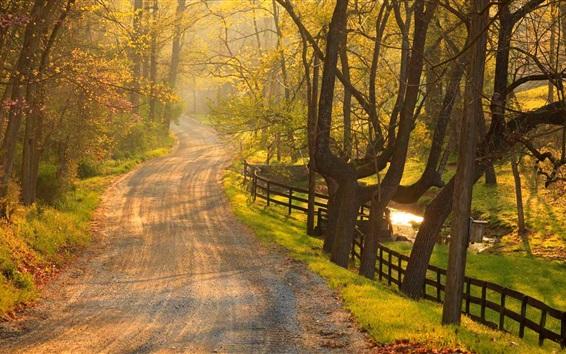 Wallpaper Park, trees, fence, path, grass, sun rays