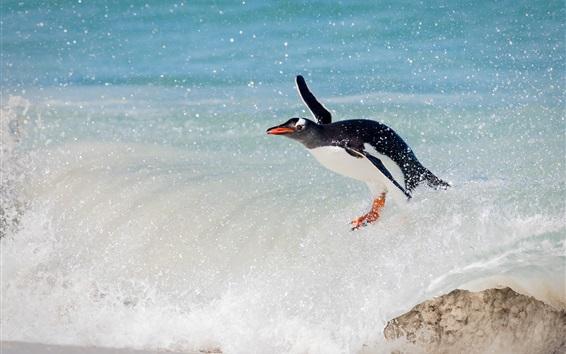 水しぶきとペンギン