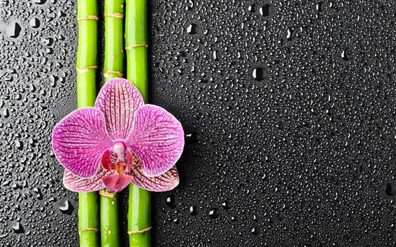 Fondos de pantalla Phalaenopsis, bambú, gotas de agua