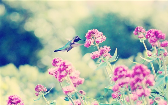壁紙 ピンクの花、ハチドリ、ボケ