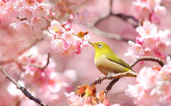Fond d'écran Fleurs roses, sakura, oiseau
