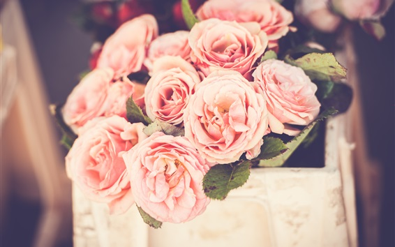Fond d'écran Roses roses, fleurs, bokeh