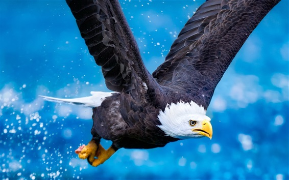 Wallpaper Predator, eagle flying, wings, blue sky