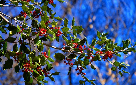 Wallpaper Red berries, tree branches, leaves, bokeh