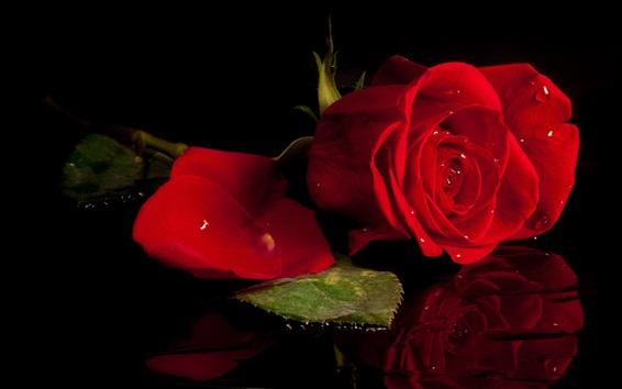 Wallpaper Red rose, black background, mirror