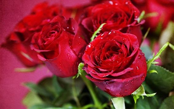 Fond d'écran Roses rouges, rosée, fleurs