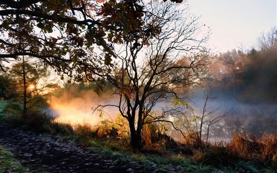 Wallpaper River, trees, fog, morning, autumn