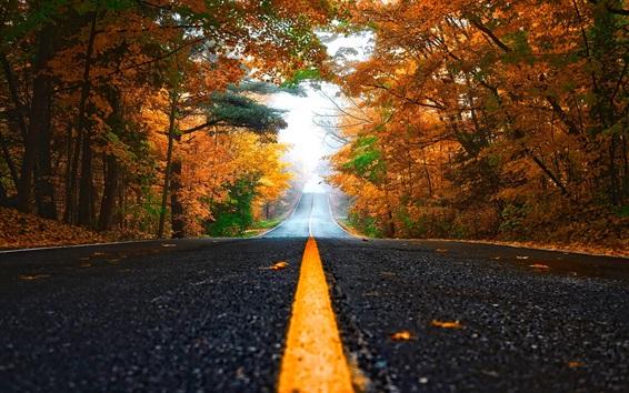 Fond d'écran Route, arbres, forêt, brouillard, automne