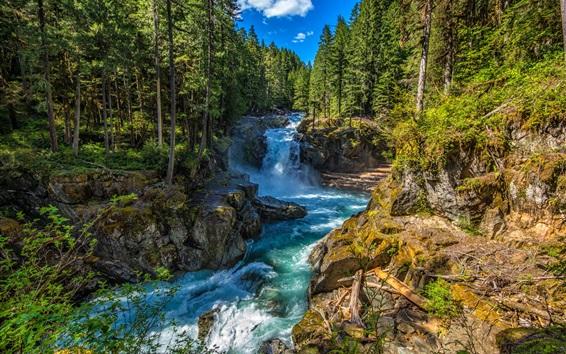Обои Государственный парк Silver Falls, Вашингтон, США, ручей, деревья, скалы