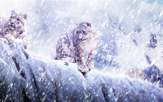 Papéis de Parede Leopardo de neve, tempestade de neve, inverno