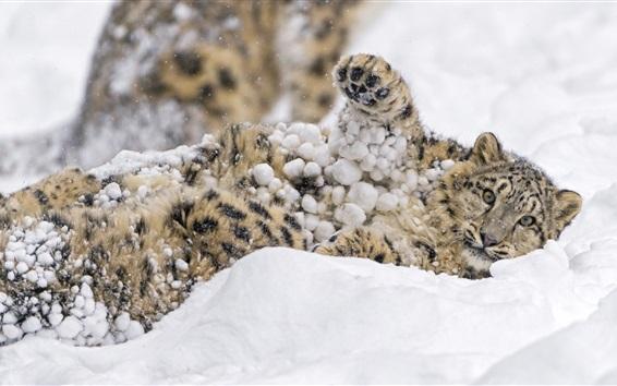 壁紙 スノーレオパルド、雪遊び、冬