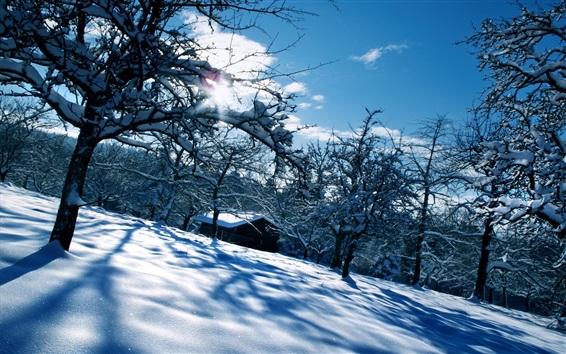 Обои Снег, деревья, дом, солнце, зима