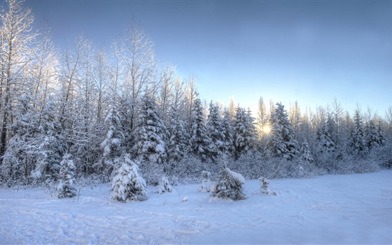Wallpaper Snow, trees, sunset, winter