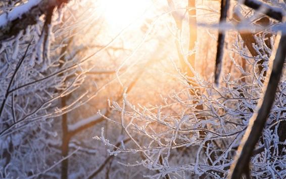 Fondos de pantalla Nieve, ramitas, bosque, resplandor, invierno