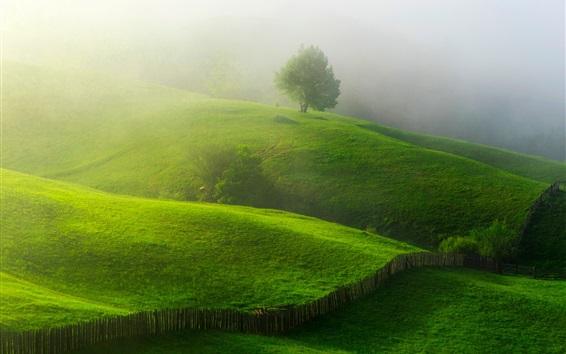 Wallpaper Spring, greens, hills, trees, fence