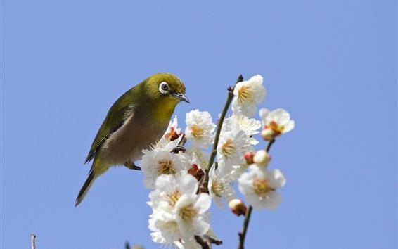 Wallpaper Spring, white flowers, bird