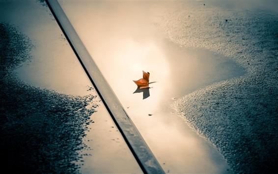 Wallpaper Street, puddle, leaf