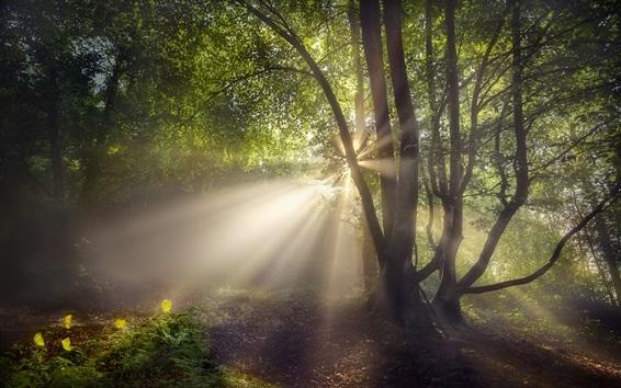 Fondos de pantalla Verano, bosque, rayos del sol