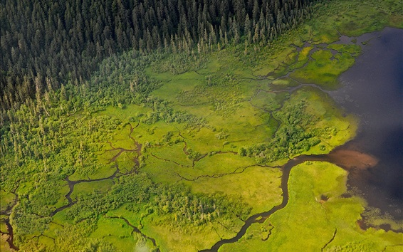 Fond d'écran Marécage, rivière, arbres, vert, vue de dessus